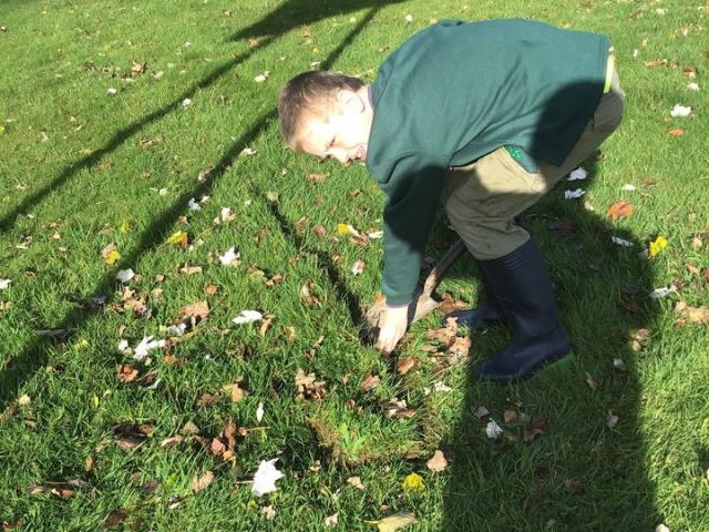 Daffodil Planting at Nobles Hospital